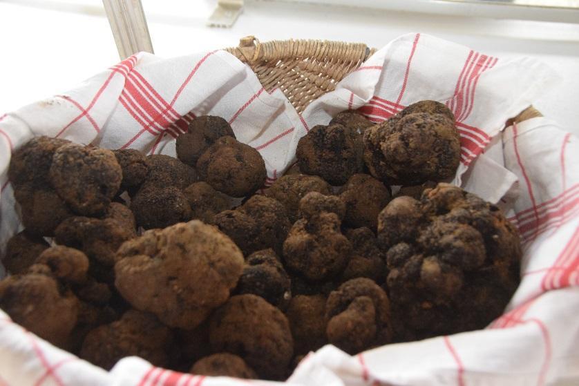 Panier d'osier rempli de truffes du Périgord